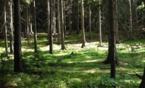 Tajemný les Bor u Českých Budějovic