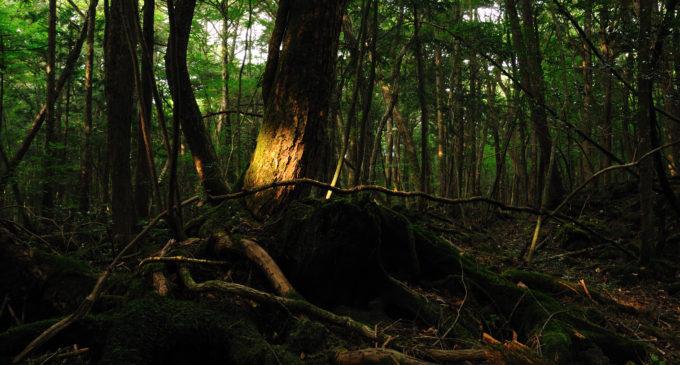 Les sebevrahů-Aokigahara
