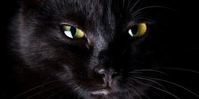 Kočky – jaké tajemství ukrývá ďáblovo stvoření?