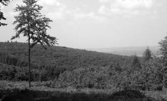 Tajemné Konůvky ve Ždánickém lese
