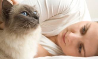 Plačící kočka hlásí smrt!