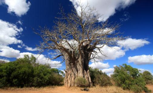 Existují masožravé stromy?