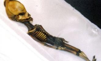 Neznámý humanoid z pouště Atacama – člověk nebo mimozemšťan?