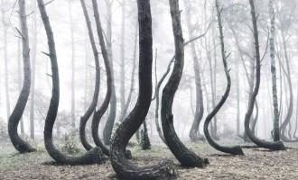 Záhadný les v Polsku skrývá mnoho tajemství a nikomu se nepodařilo zjistit, proč v něm stromy rostou nakřivo