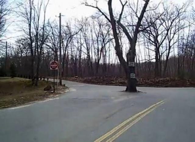 Americký strom čarodějnic: obklopují ho paranormální jevy?