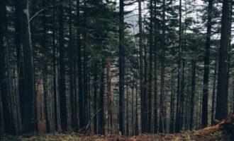 VIDEO: Černý les ve Virginii – přitahuje duše zemřelých?