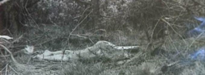 Neznámá známá dáma z dun: Kdo ji brutálně zavraždil?