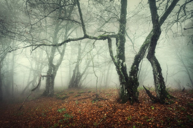 Nejstrašidelnější les v České republice: Jaké legendy se o něm povídají?