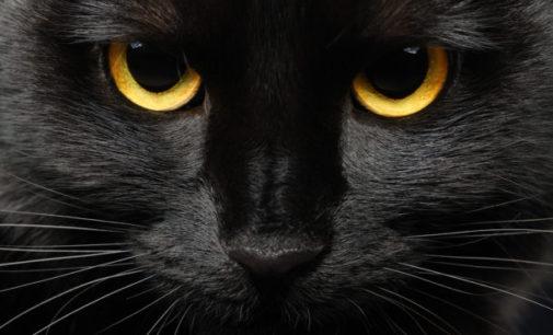 Černé kočky a pověrčivost: Opravdu jsou symbolem neštěstí?