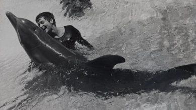 Láska mezi člověkem a delfínem
